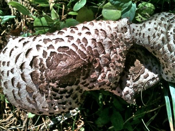 Penzance Mushroom