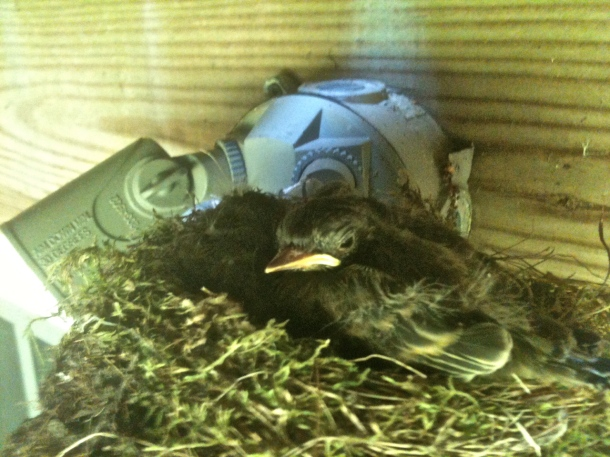Looked like one or two, but three baby birds were cuddled closely.