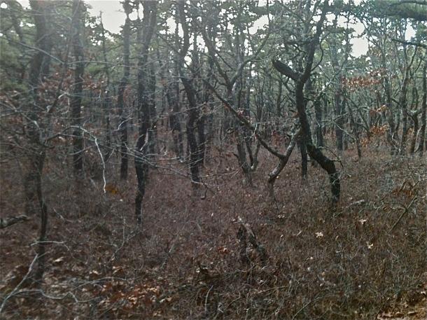 Entrance to White Cedar Swamp Forest -November 2013