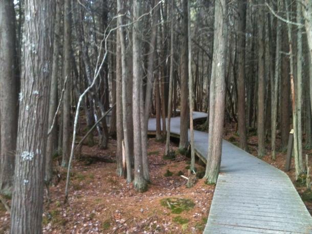 White Cedar Swamp Forest in November