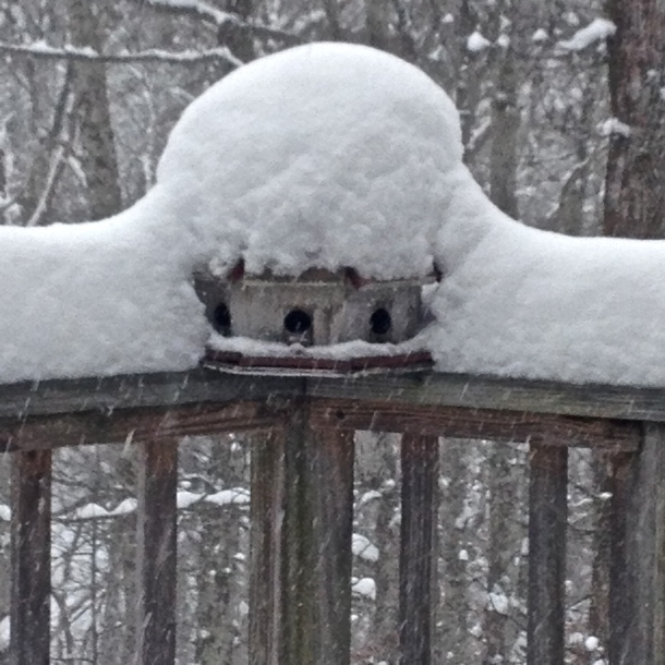 Bird Snow Fort
